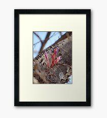 Epiphyte I - Epifita Framed Print