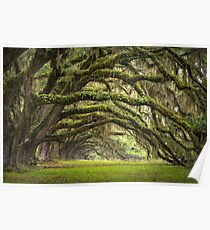 Avenue of Oaks - Charleston SC Plantation Live Oaks Poster