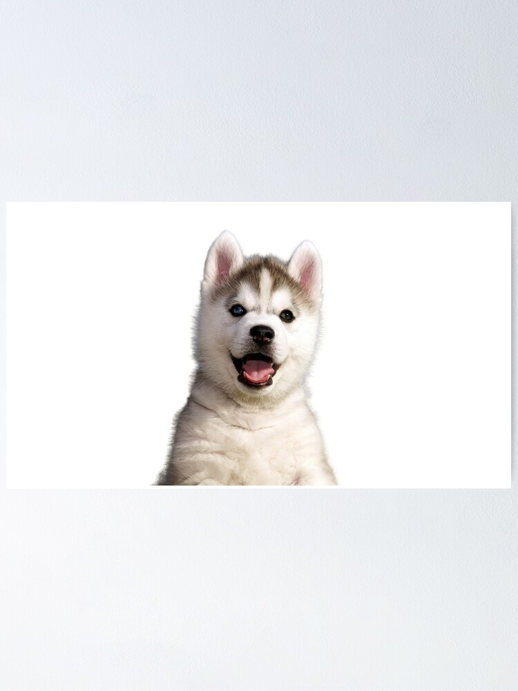 Husky Puppy Cute Skoda Small White Baby Funny Prints Poster By Yanulik Redbubble