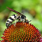 Wasp On A Cone Flower by Kathy Baccari