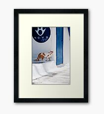 Cat in Mykonos Framed Print