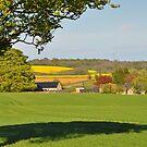 Leckhampton Hill, Cotswolds, Gloucestershire by Nick  Gill
