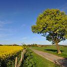Leckhampton Hill, Cotswolds,Gloucestershire by Nick  Gill