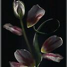 Tulip Art... by linmarie