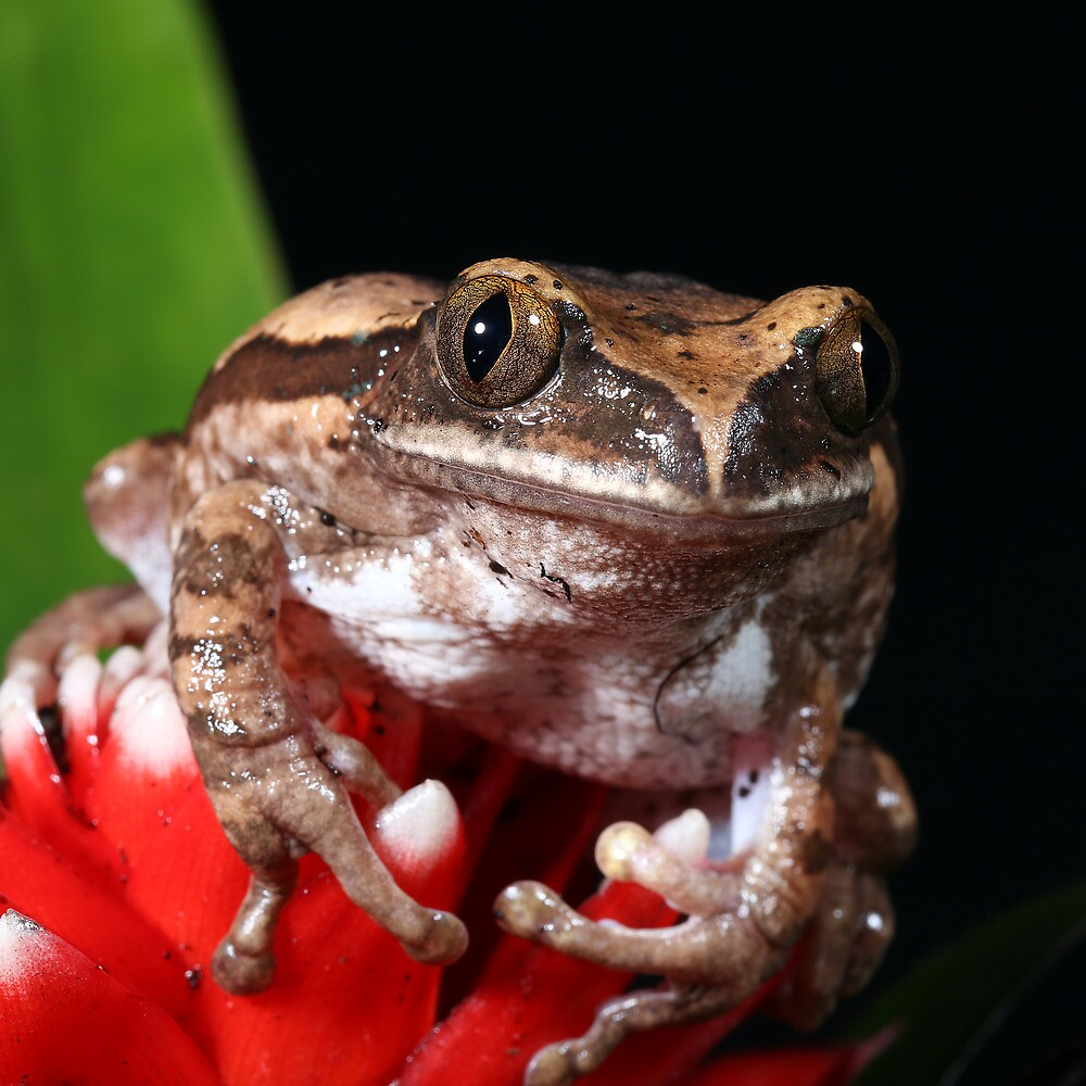Tree Frog by photobymdavey