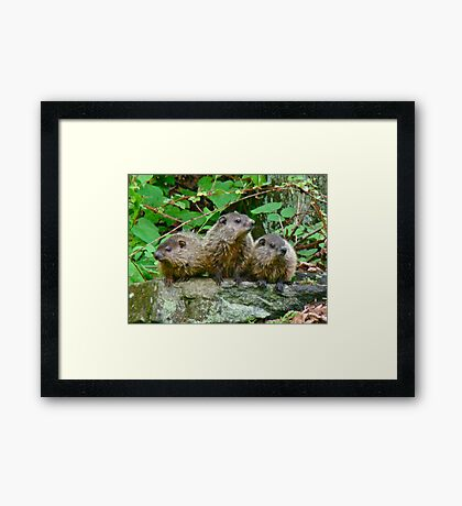 A Trio of Trouble   Framed Print
