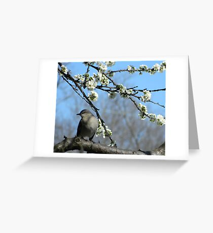 Waiting for fruit Greeting Card