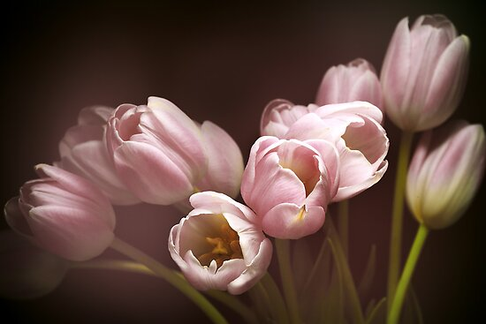 Those pink tulips by EbyArts