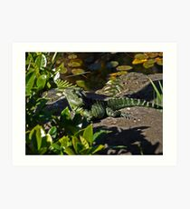 Water dragon on safari Art Print