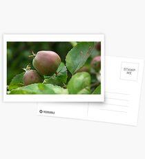 Postales Rustic Apples on Tree