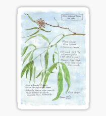 Black Karee leaves - Rhus lancea - Botanical illustration Sticker