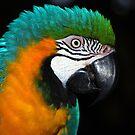 Pretty Parrot by Carol Barona