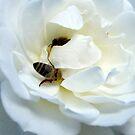 Bee's rest by Kablwerk
