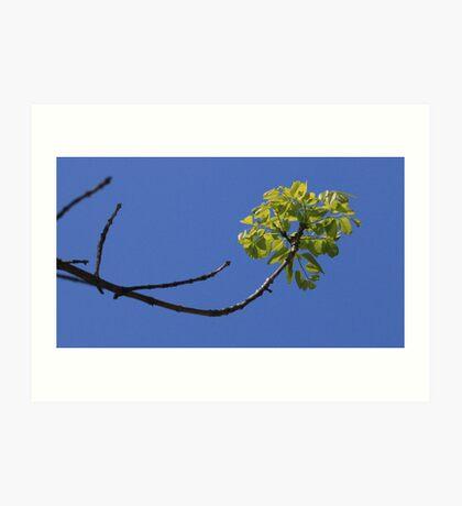 Just A Tree ~ Art Print