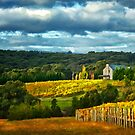 Autumn in the Yarra Valley by annibels