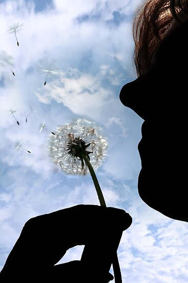 silhouetted dandelion being gently blown by woman by morrbyte