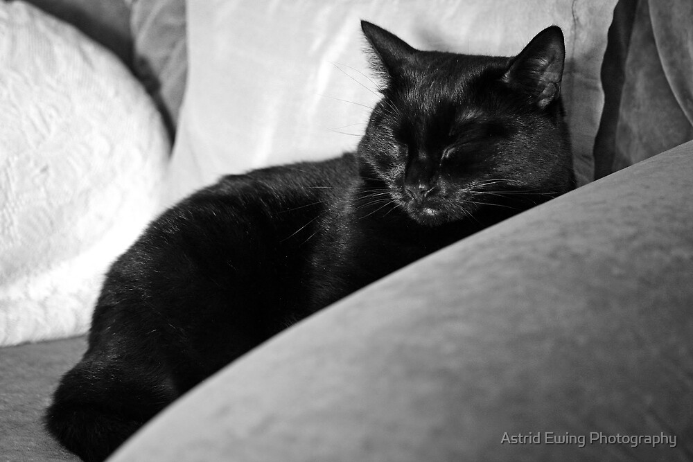 """""""I just want to sleep off my dinner in peace..."""" by Astrid Ewing Photography"""