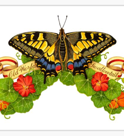 Old World Swallowtail Butterfly and Nasturtiums Sticker