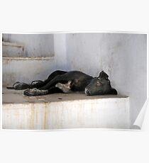 Slum Dog India Poster