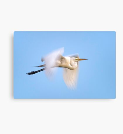 Egret blur  Canvas Print