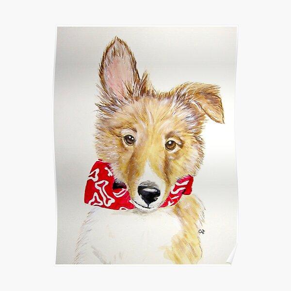 Tuck, Shetland Sheepdog Puppy Poster