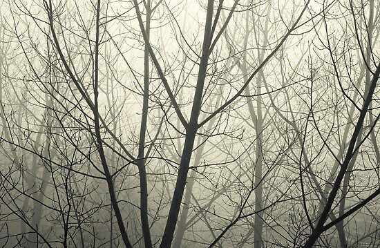 the fog by Ingrid Beddoes