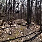 Walk in the woods by Dragonflye2