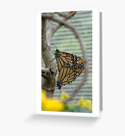 Nature in Repose Greeting Card