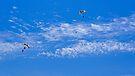 Parachute by Jessica Liatys