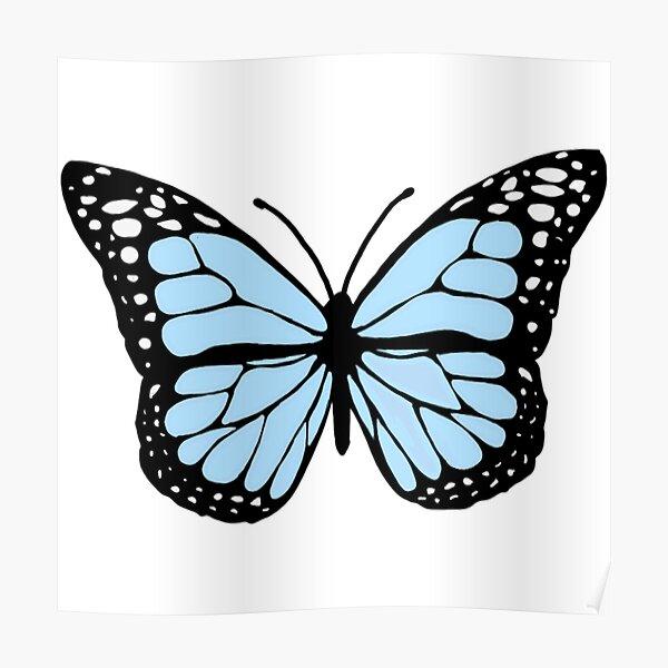 cornflower blue butterfly Poster