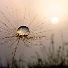 Dandelion Sunrise by Gazart