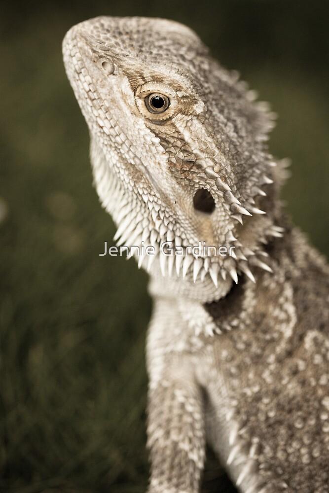Bearded Dragon by Jennie Gardiner