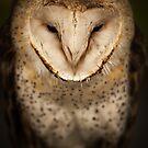 Australian masked Owl by Gavin Poh