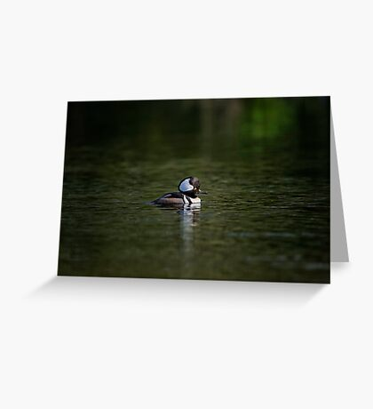 A Lone Hooded Merganser Greeting Card
