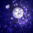 Dandelion at night by Margherita Bientinesi