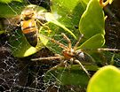A Spider Caught A Honey Bee by Betsy  Seeton