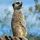 On Watch ! by Morag Bates