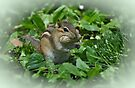 Little Chipmunk  by Elaine  Manley