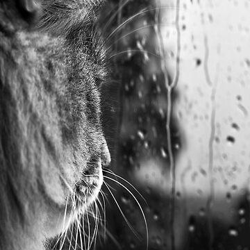 Sad cat looking the raining window by Street-Art