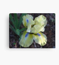 Playful Iris Canvas Print