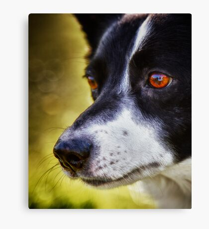 The love in her eyes Canvas Print