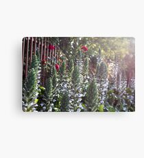 Spike Orchids Canvas Print
