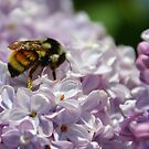 Pollen Dancing by Lisa Baumeler