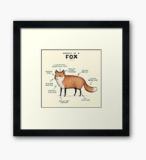 Anatomy of a Fox Framed Print