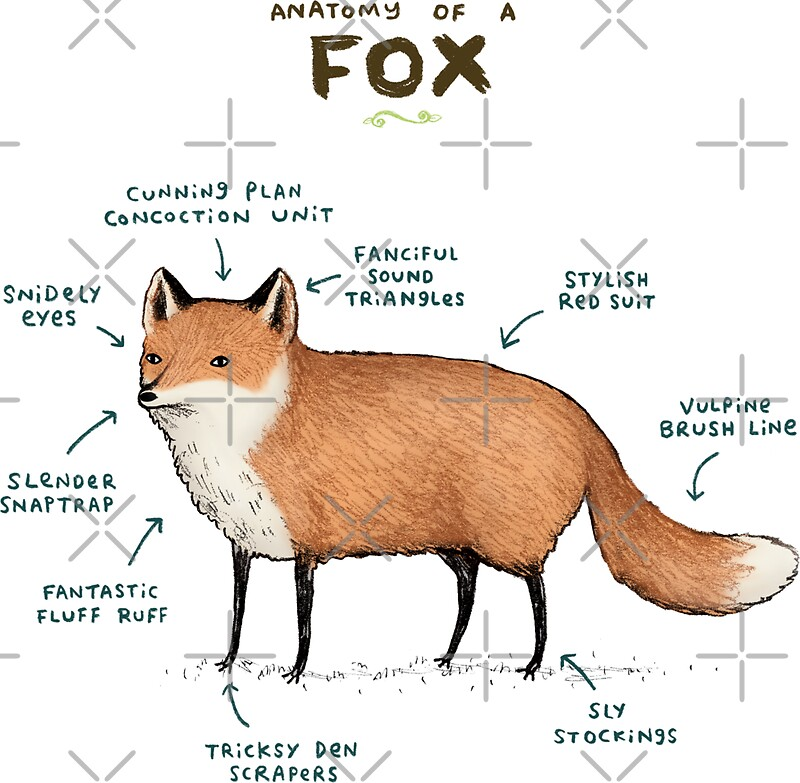 Quot Anatomy Of A Fox Quot Stickers By Sophie Corrigan Redbubble