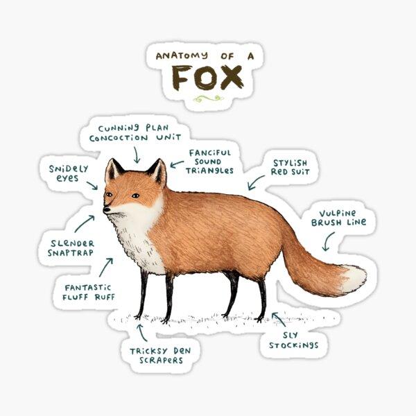 Anatomy of a Fox Sticker