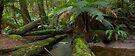 Cumberland Creek  by Timo Balk
