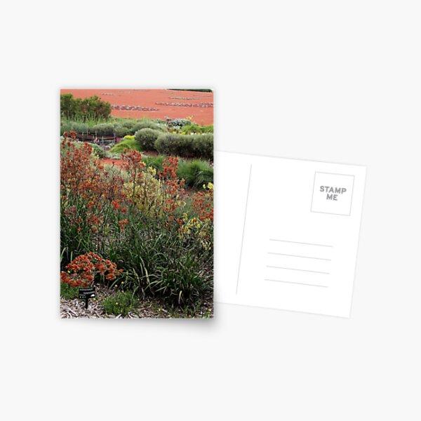 Australian Garden_Royal Botanic Gardens Cranbourne Postcard