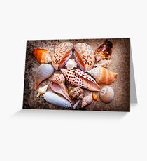 Seashells of Sanibel Island Greeting Card