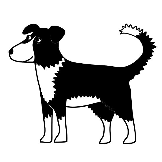 Border Collie by Nic Squirrell